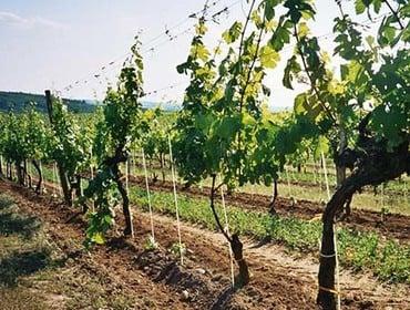 Frutticoltura e viticoltura