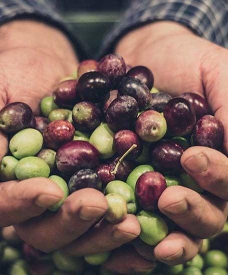 Produkte für den Olivenanbau