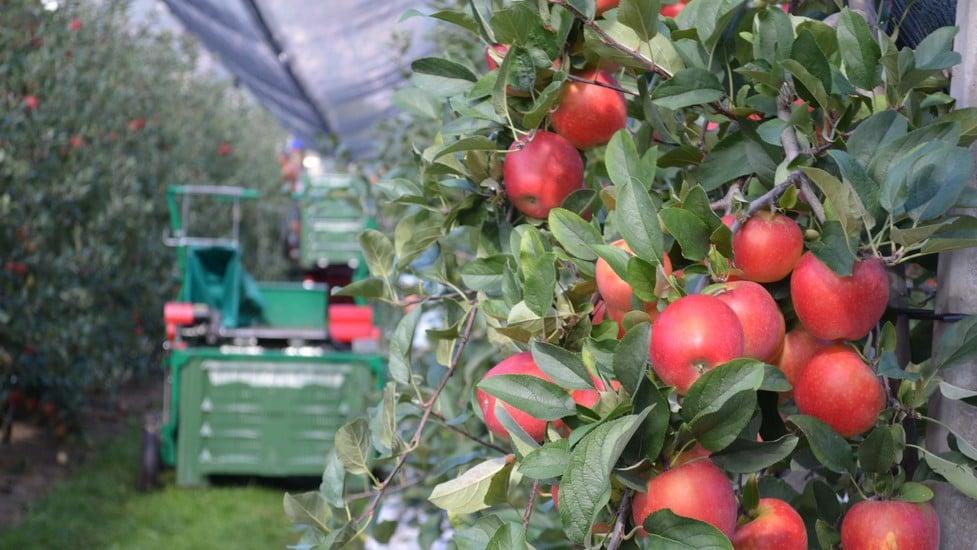 Produkte für die Obstwirtschaft