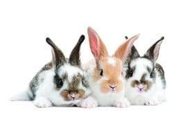 Conigli e roditori