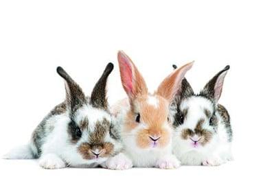 Kaninchen und Nager