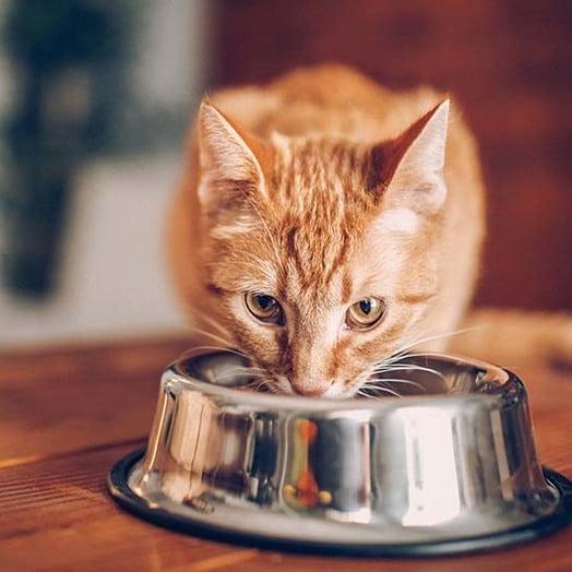Gatto Tuttogiardino Cibo Accessori Per Animali