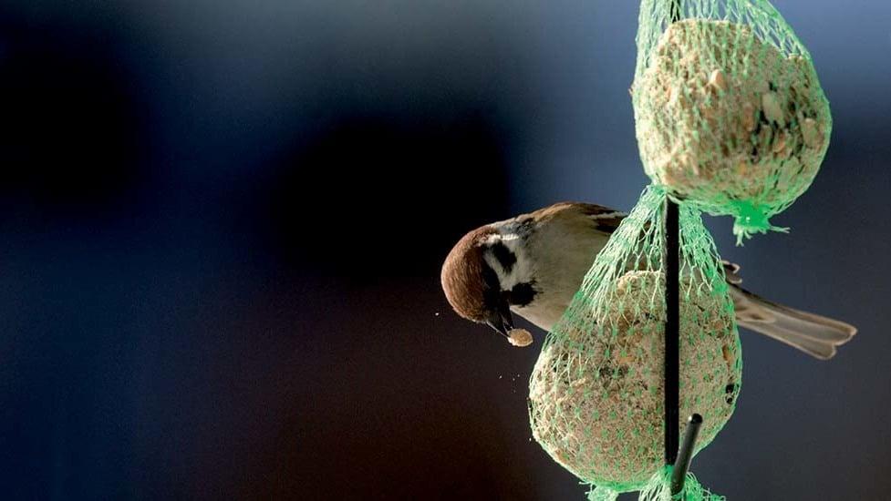 Mangimi per uccelli selvatici