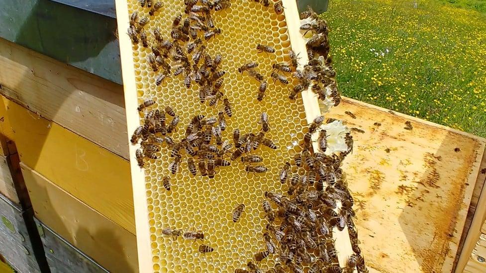 Alimentazione per le api