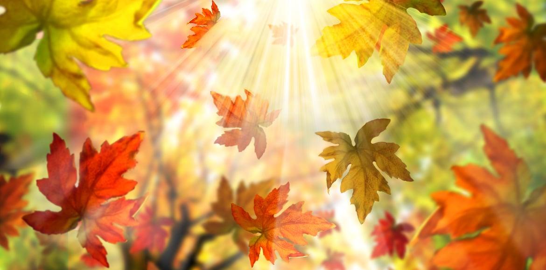 Unsere Oktobertipps für den Garten