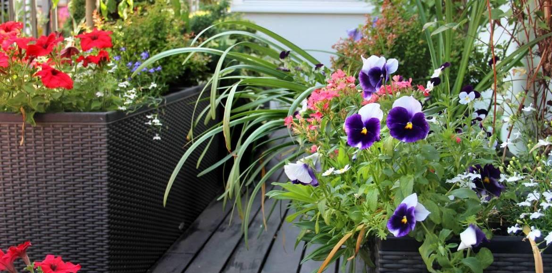 Tipps für eine üppige Blumenpracht
