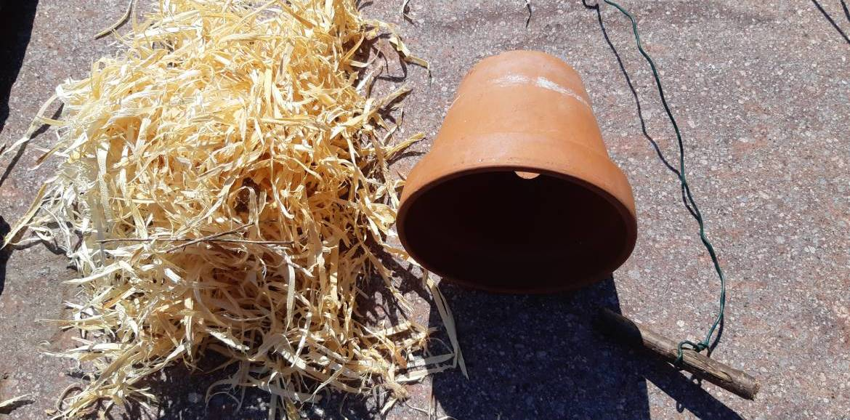 Der Ohrwurm als gewünschter Helfer im Hausgarten