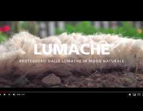 Video: proteggersi dalle lumache