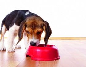 Gli alimenti più dannosi per il vostro cane