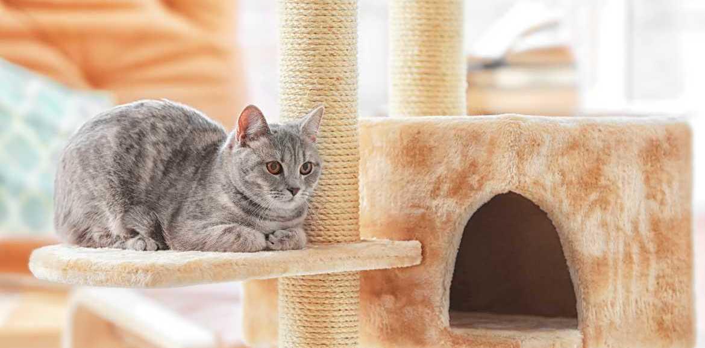 Das braucht Ihre Katze im Winter