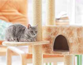 Tutto ciò di cui ha bisogno il vostro gatto in inverno