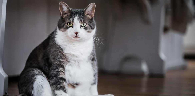 Vier Tipps wie Sie Ihre Katze fit und gesund halten