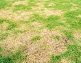 Rasenschäden durch Sonne: so wird er wieder grün