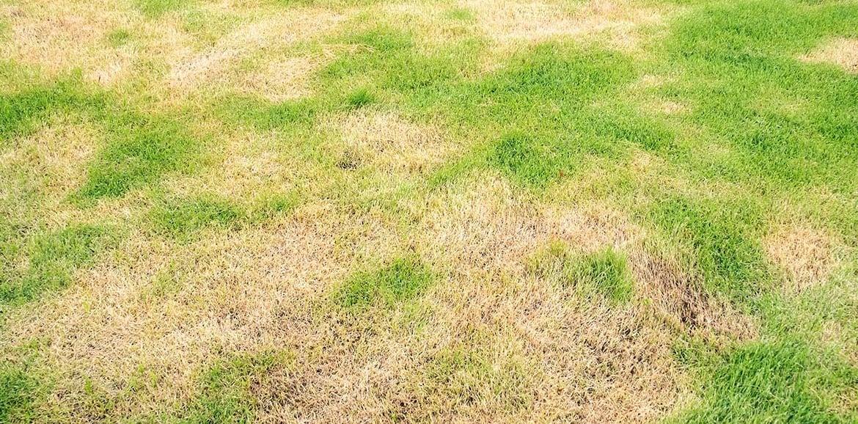 Prato danneggiato dal sole estivo? Ecco cosa fare