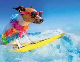 Proteggiamo i nostri animali dal caldo estivo!