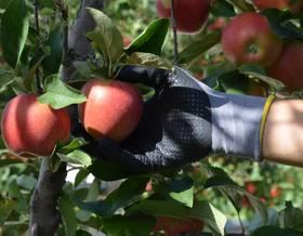 Guida alla raccolta della frutta