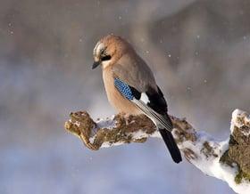 Aiutiamo gli uccellini a superare l'inverno